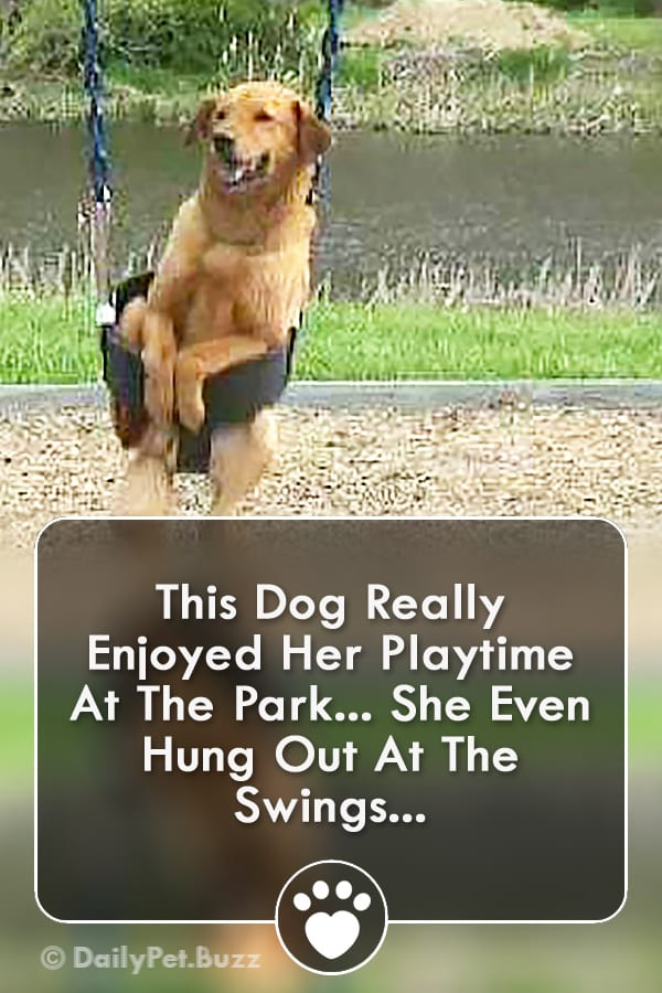 This Dog Really Enjoyed Her Playtime At The Park... She Even Hung Out At The Swings...