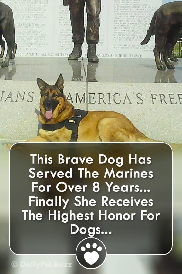 This Brave Dog Has Served The Marines For Over 8 Years... Finally She Receives The Highest Honor For Dogs...