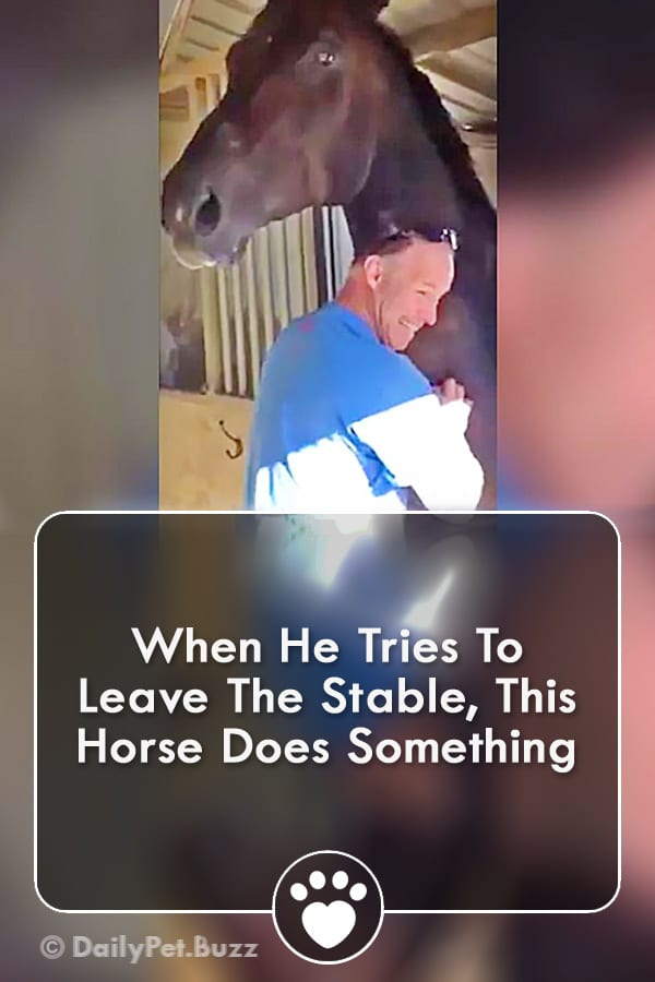 When He Tries To Leave The Stable, This Horse Does Something