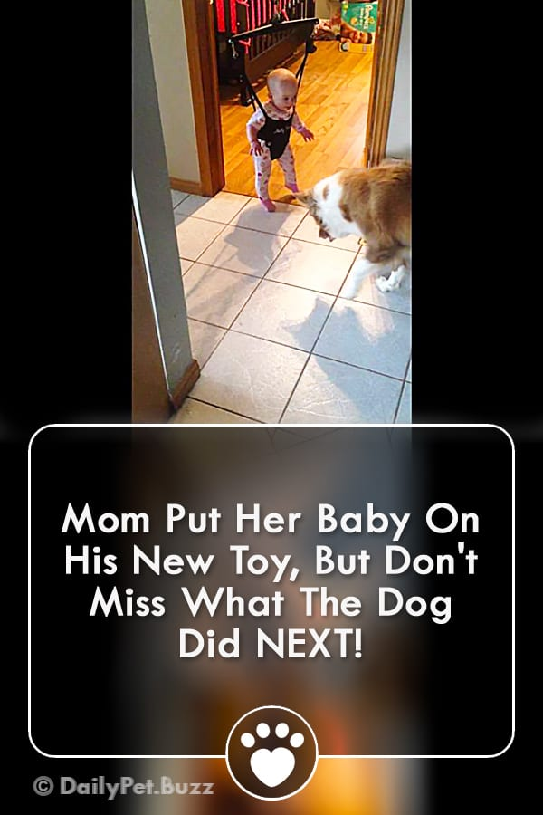 Mom Put Her Baby On His New Toy, But Don\'t Miss What The Dog Did NEXT!