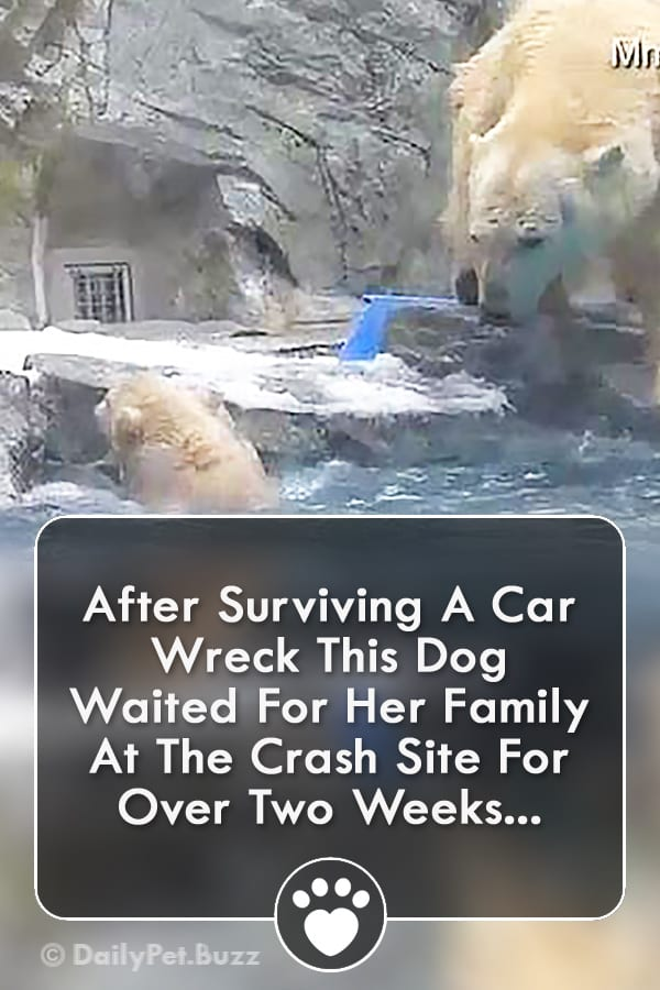 After Surviving A Car Wreck This Dog Waited For Her Family At The Crash Site For Over Two Weeks...