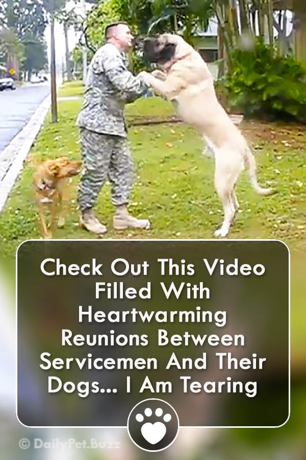 Check Out This Video Filled With Heartwarming Reunions Between Servicemen And Their Dogs... I Am Tearing Up...