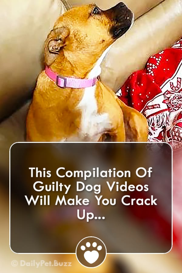 This Compilation Of Guilty Dog Videos Will Make You Crack Up...