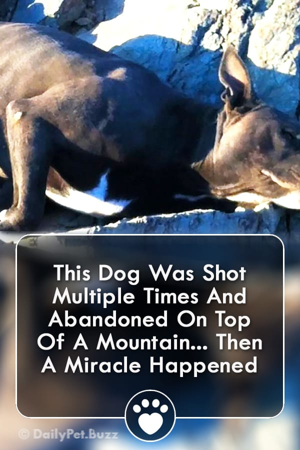 This Dog Was Shot Multiple Times And Abandoned On Top Of A Mountain... Then A Miracle Happened