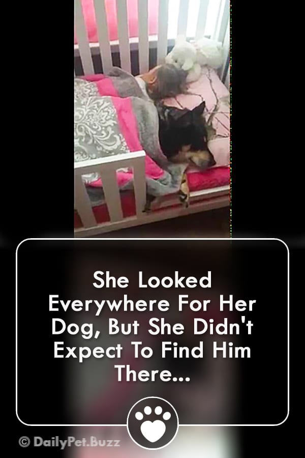 She Looked Everywhere For Her Dog, But She Didn\'t Expect To Find Him There...