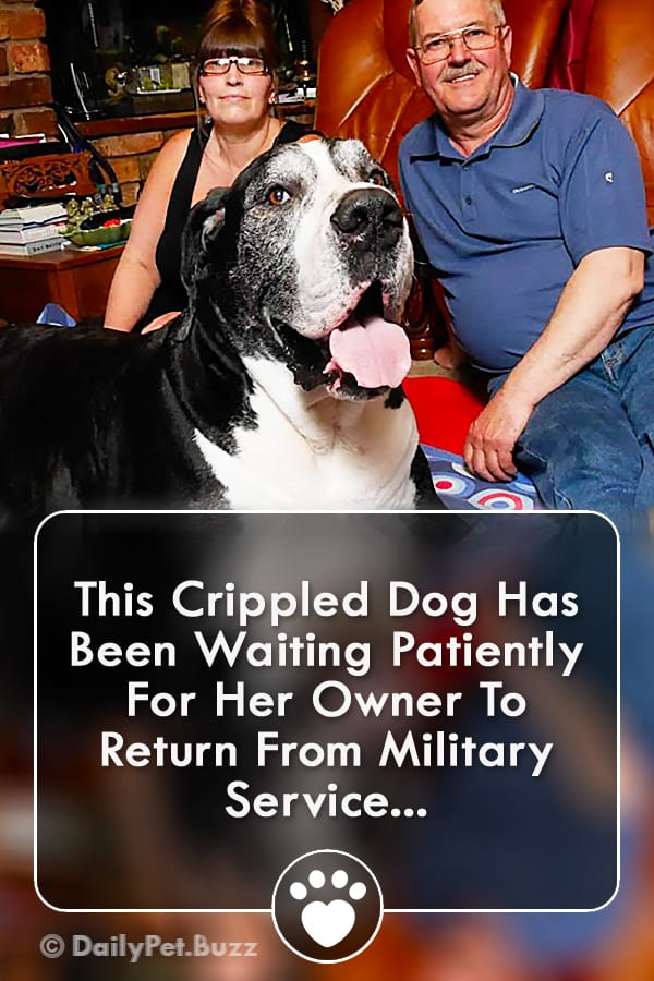 This Crippled Dog Has Been Waiting Patiently For Her Owner To Return From Military Service...
