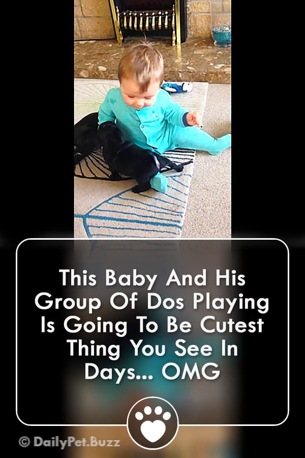 This Baby And His Group Of Dos Playing Is Going To Be Cutest Thing You See In Days... OMG