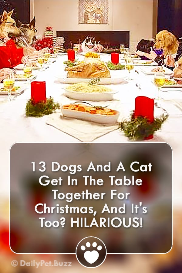 13 Dogs And A Cat Get In The Table Together For Christmas, And It\'s Too? HILARIOUS!