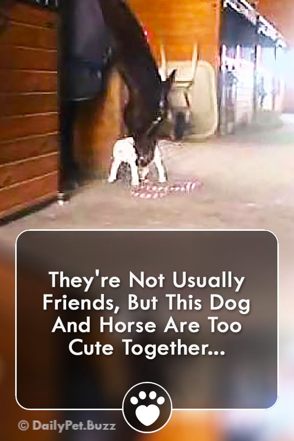 They\'re Not Usually Friends, But This Dog And Horse Are Too Cute Together...