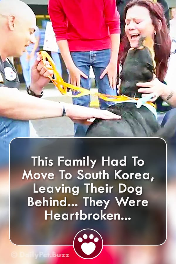 This Family Had To Move To South Korea, Leaving Their Dog Behind... They Were Heartbroken...