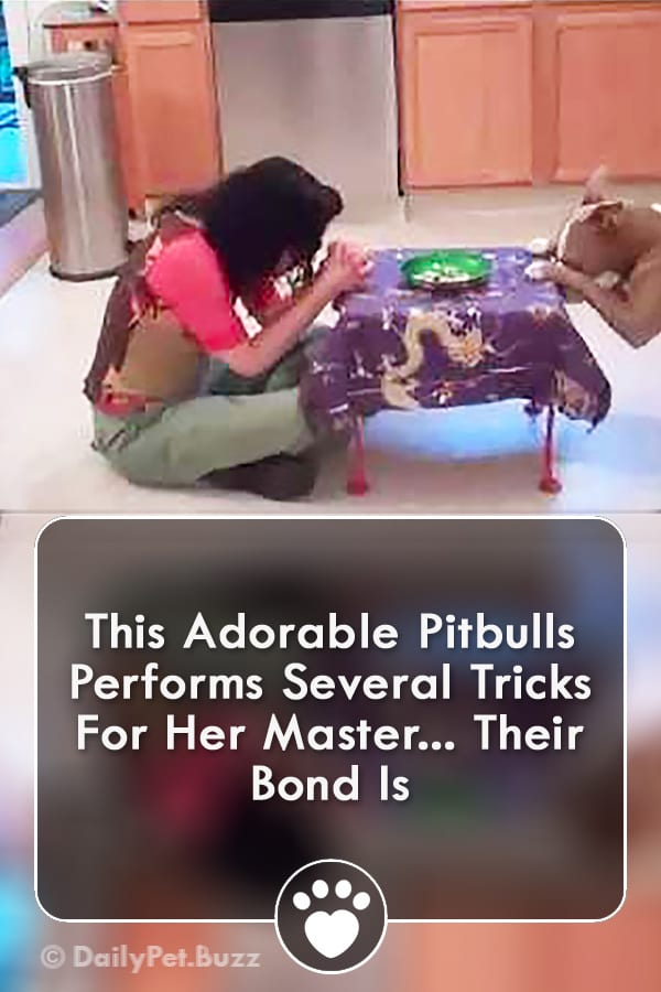 This Adorable Pitbulls Performs Several Tricks For Her Master... Their Bond Is