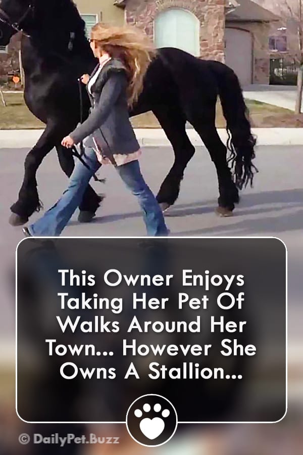 This Owner Enjoys Taking Her Pet Of Walks Around Her Town... However She Owns A Stallion...