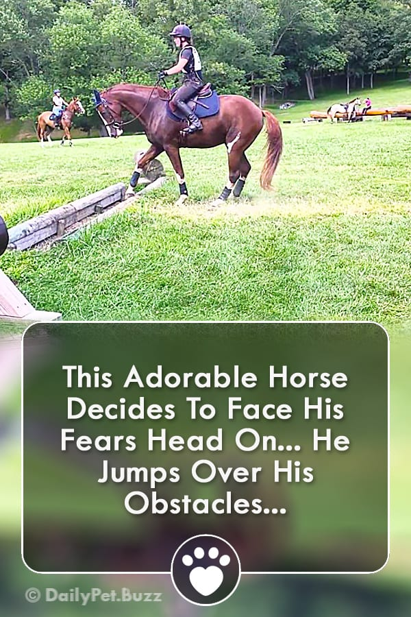 This Adorable Horse Decides To Face His Fears Head On... He Jumps Over His Obstacles...