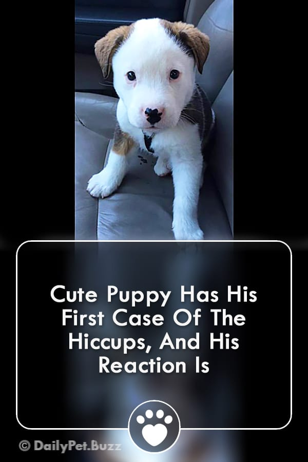 Cute Puppy Has His First Case Of The Hiccups, And His Reaction Is