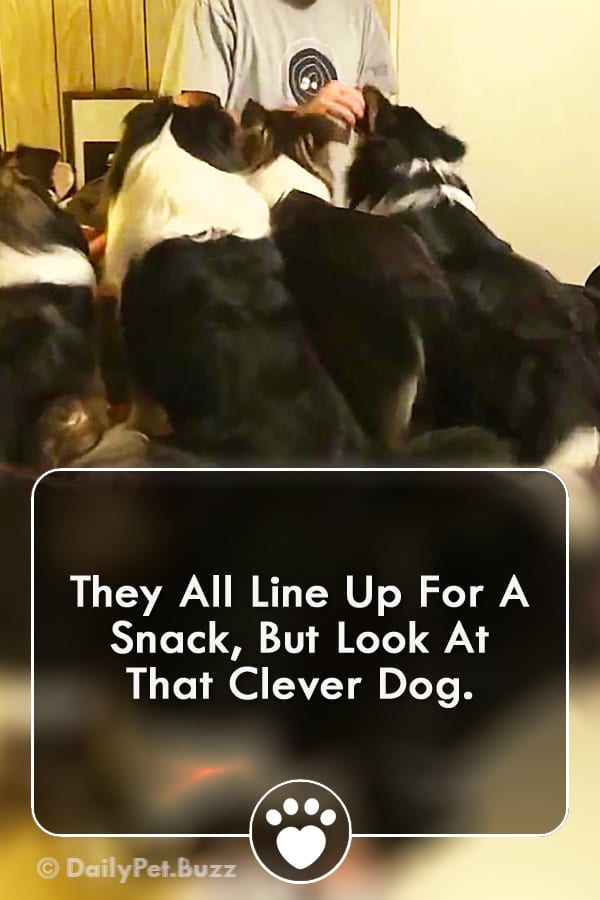 They All Line Up For A Snack, But Look At That Clever Dog.
