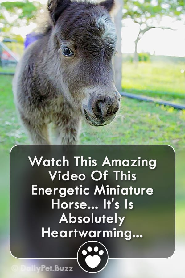 Watch This Amazing Video Of This Energetic Miniature Horse... It\'s Is Absolutely Heartwarming!