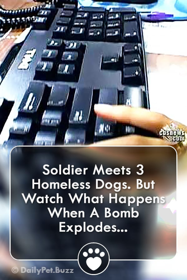 Soldier Meets 3 Homeless Dogs. But Watch What Happens When A Bomb Explodes...