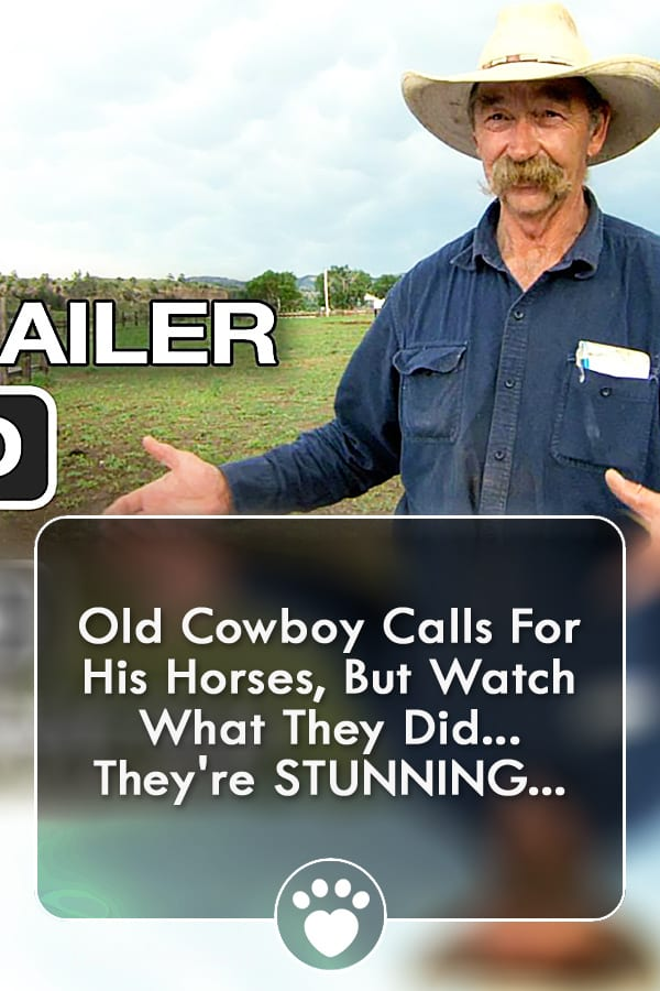 Old Cowboy Calls For His Horses, But Watch What They Did... They\'re STUNNING...