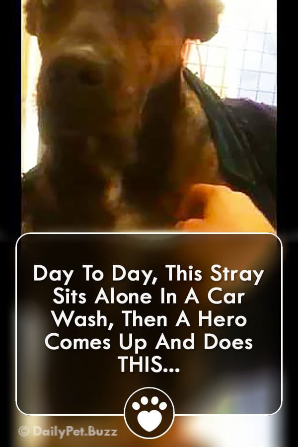 Day To Day, This Stray Sits Alone In A Car Wash, Then A Hero Comes Up And Does THIS...