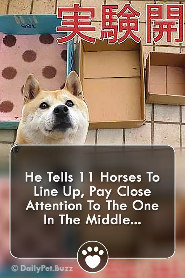 He Tells 11 Horses To Line Up, Pay Close Attention To The One In The Middle...