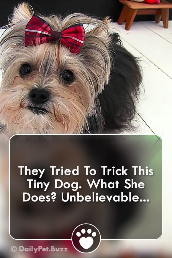 They Tried To Trick This Tiny Dog. What She Does? Unbelievable...