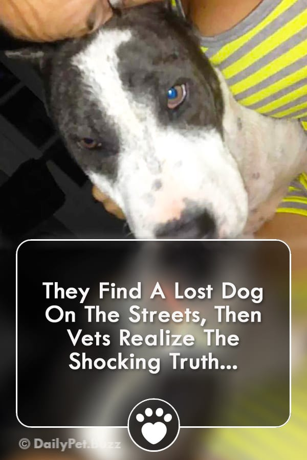 They Find A Lost Dog On The Streets, Then Vets Realize The Shocking Truth...