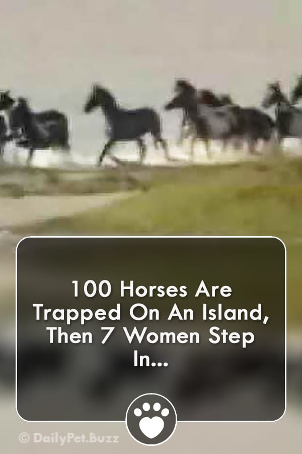 100 Horses Are Trapped On An Island, Then 7 Women Step In...