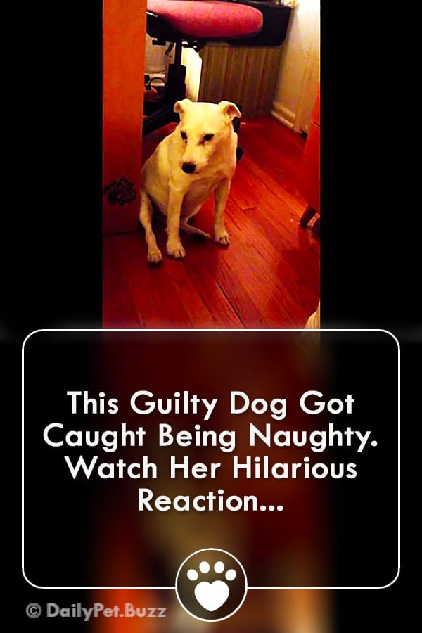 This Guilty Dog Got Caught Being Naughty. Watch Her Hilarious Reaction...
