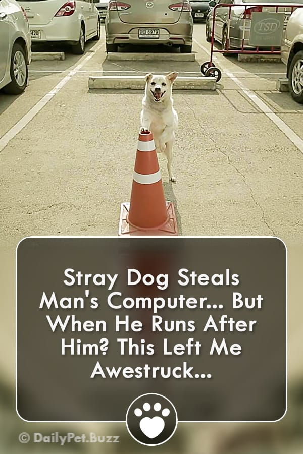 Stray Dog Steals Man\'s Computer... But When He Runs After Him? This Left Me Awestruck...