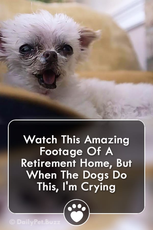Watch This Amazing Footage Of A Retirement Home, But When The Dogs Do This, I\'m Crying