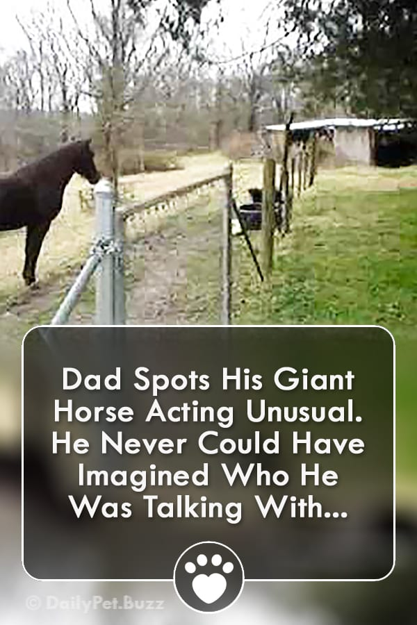 Dad Spots His Giant Horse Acting Unusual. He Never Could Have Imagined Who He Was Talking With...