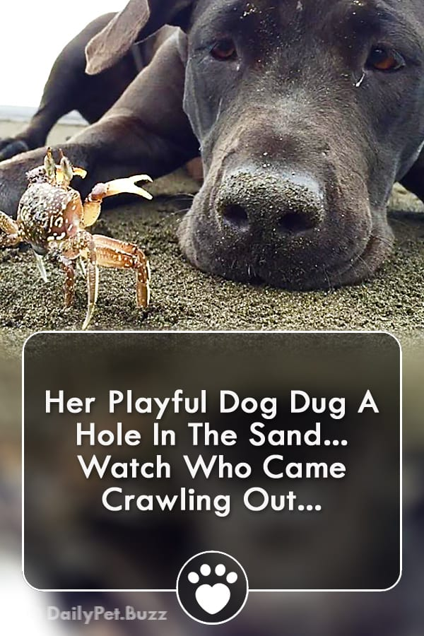 Her Playful Dog Dug A Hole In The Sand... Watch Who Came Crawling Out...