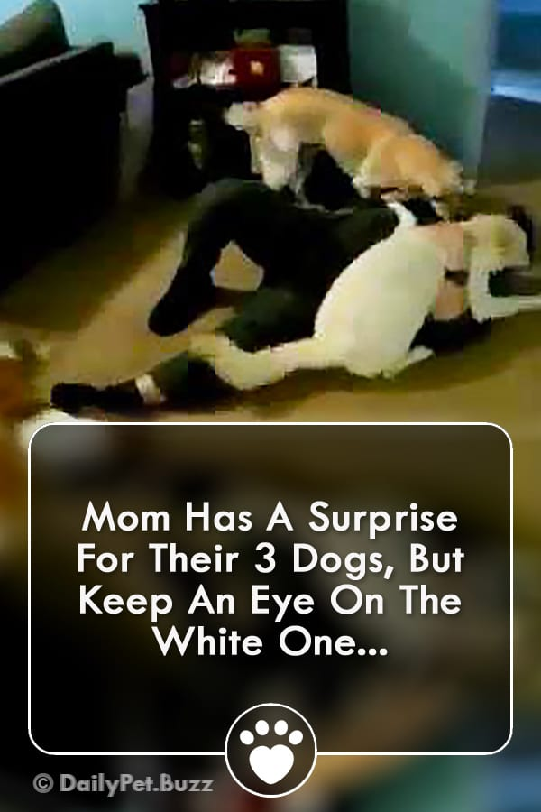 Mom Has A Surprise For Their 3 Dogs, But Keep An Eye On The White One...