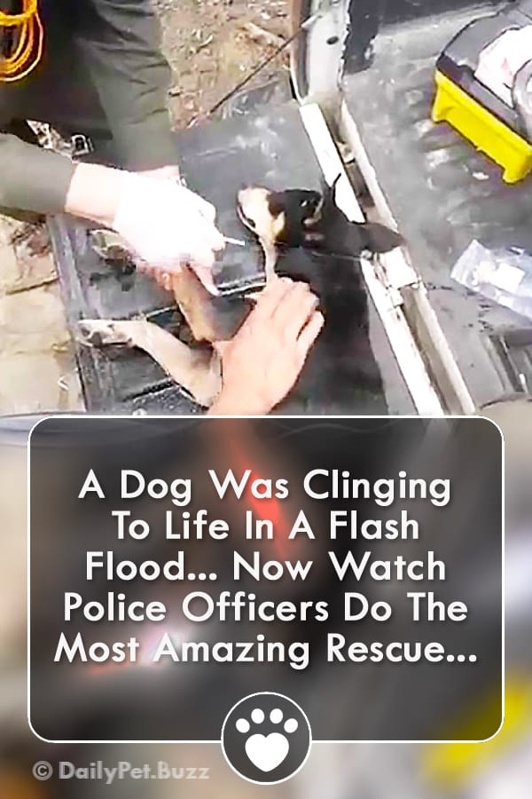 A Dog Was Clinging To Life In A Flash Flood... Now Watch Police Officers Do The Most Amazing Rescue...