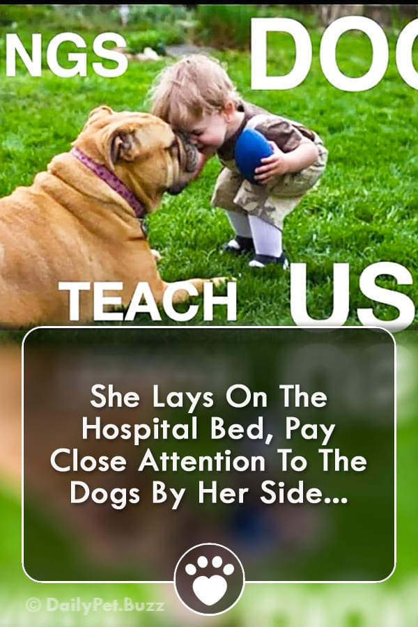She Lays On The Hospital Bed, Pay Close Attention To The Dogs By Her Side...