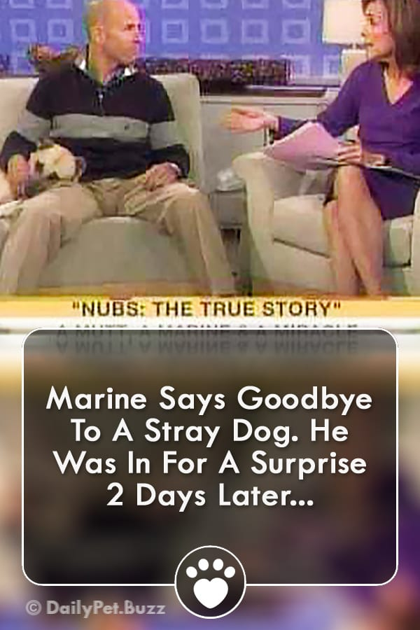 Marine Says Goodbye To A Stray Dog. He Was In For A Surprise 2 Days Later...
