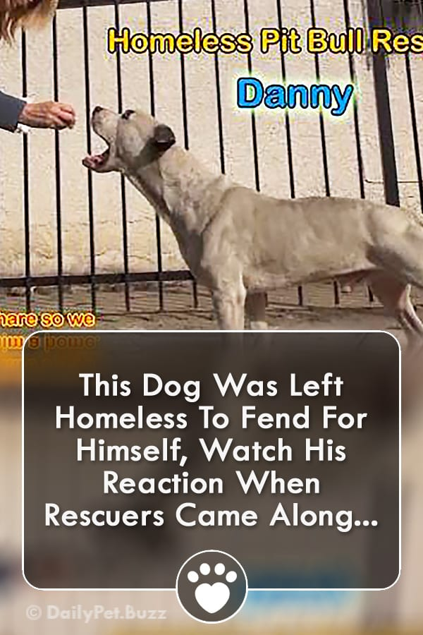 This Dog Was Left Homeless To Fend For Himself, Watch His Reaction When Rescuers Came Along...
