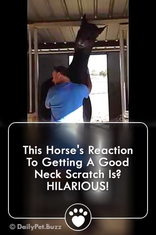 This Horse\'s Reaction To Getting A Good Neck Scratch Is? HILARIOUS!