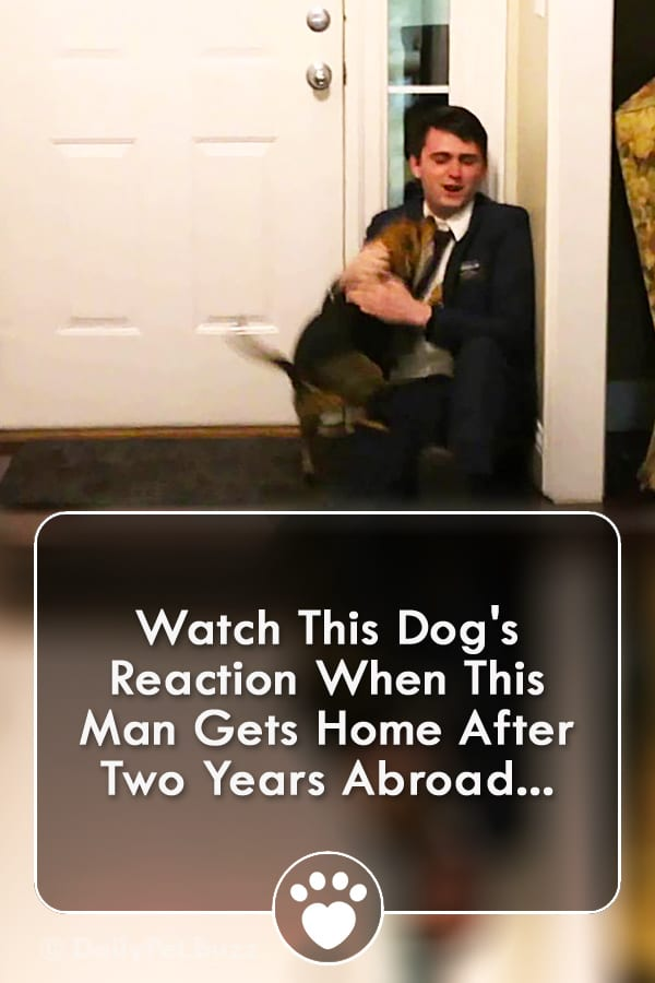 Watch This Dog\'s Reaction When This Man Gets Home After Two Years Abroad...