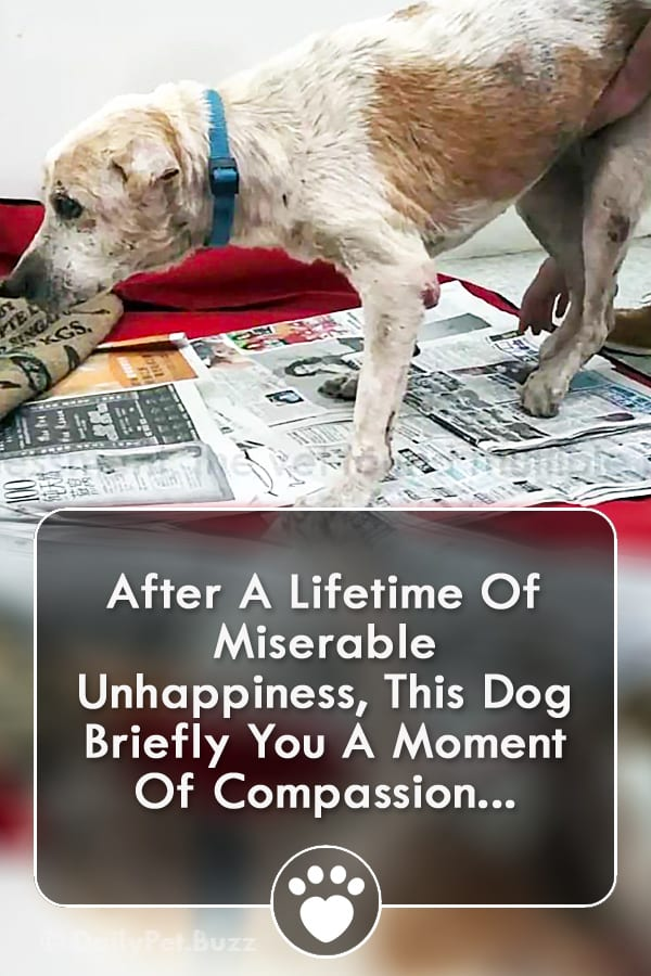 After A Lifetime Of Miserable Unhappiness, This Dog Briefly You A Moment Of Compassion...