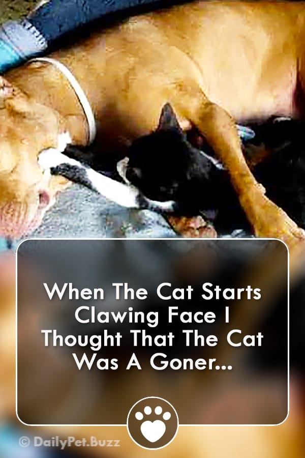 When The Cat Starts Clawing Face I Thought That The Cat Was A Goner...