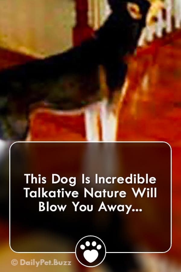 This Dog Is Incredible Talkative Nature Will Blow You Away...