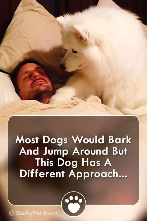 Most Dogs Would Bark And Jump Around But This Dog Has A Different Approach...