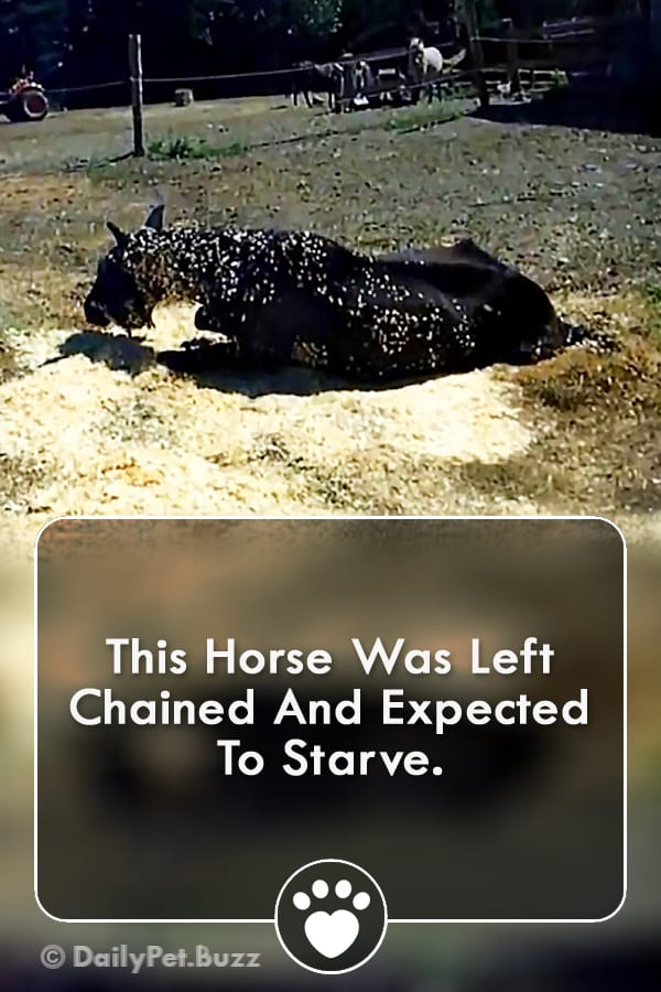 This Horse Was Left Chained And Expected To Starve.