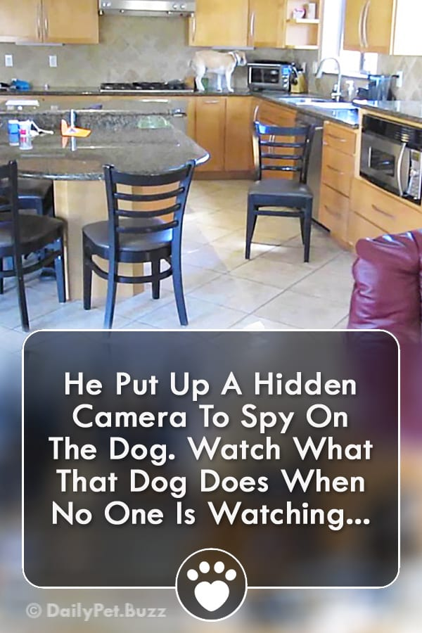 He Put Up A Hidden Camera To Spy On The Dog. Watch What That Dog Does When No One Is Watching...