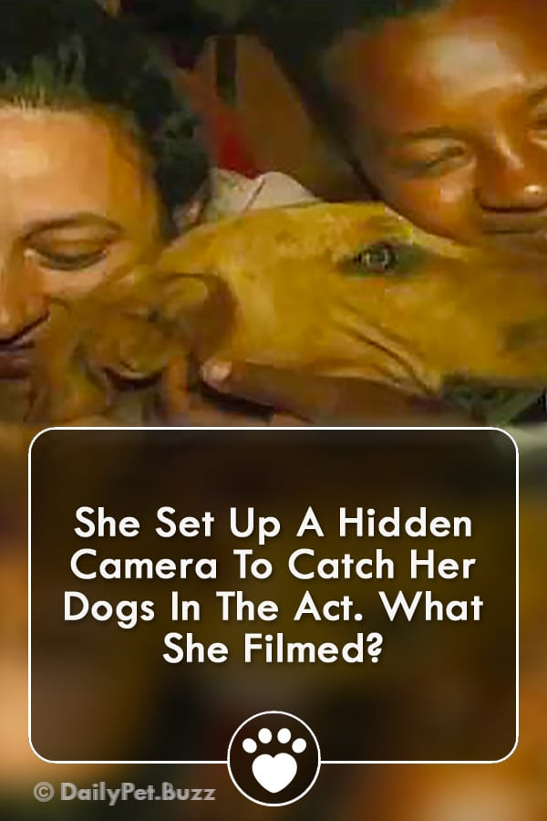 She Set Up A Hidden Camera To Catch Her Dogs In The Act. What She Filmed?