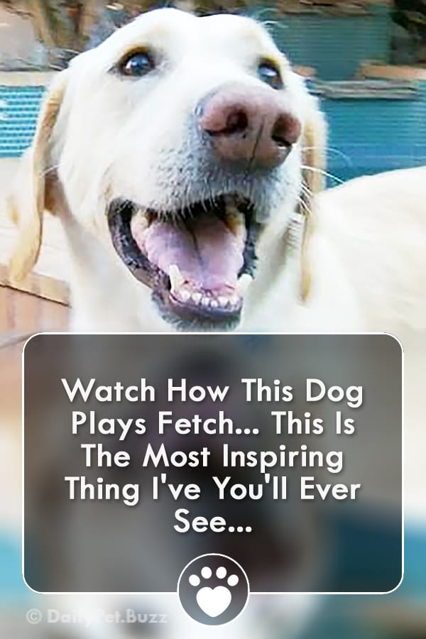 Watch How This Dog Plays Fetch... This Is The Most Inspiring Thing I\'ve You\'ll Ever See...