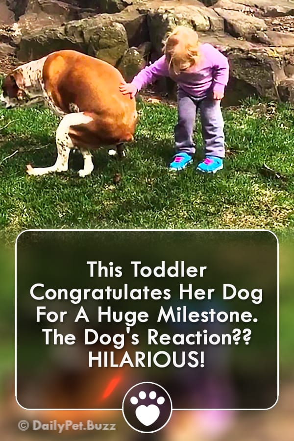 This Toddler Congratulates Her Dog For A Huge Milestone. The Dog\'s Reaction?? HILARIOUS!