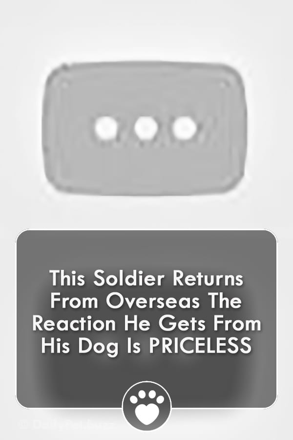 This Soldier Returns From Overseas The Reaction He Gets From His Dog Is PRICELESS
