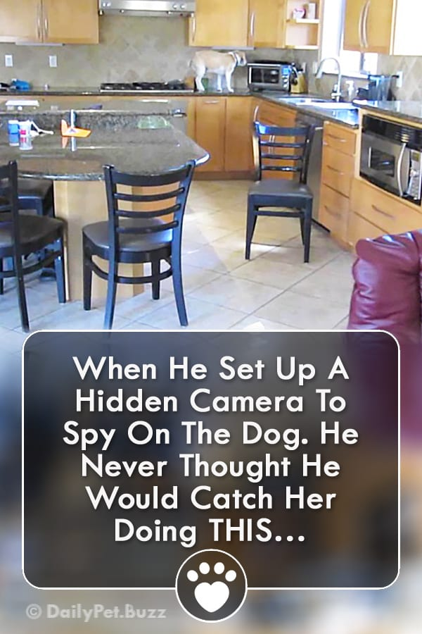 When He Set Up A Hidden Camera To Spy On The Dog. He Never Thought He Would Catch Her Doing THIS…